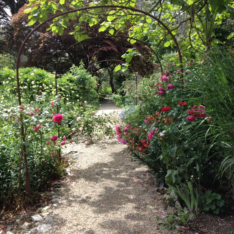 Roses flower garden