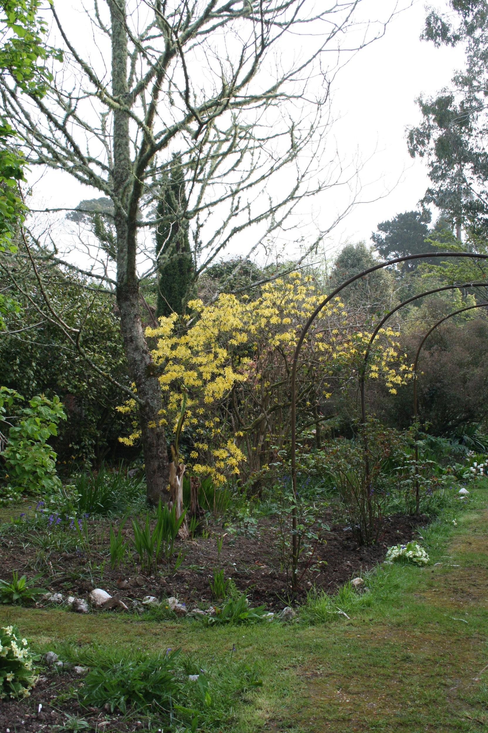 Yellowflowergarden